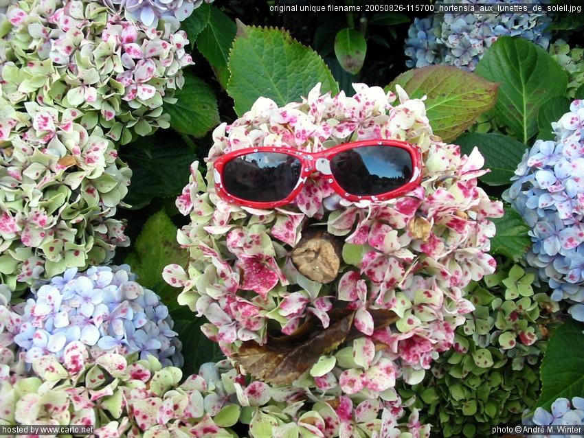 hortensia aux lunettes de soleil locronan et le m nez hom ao t 2005. Black Bedroom Furniture Sets. Home Design Ideas