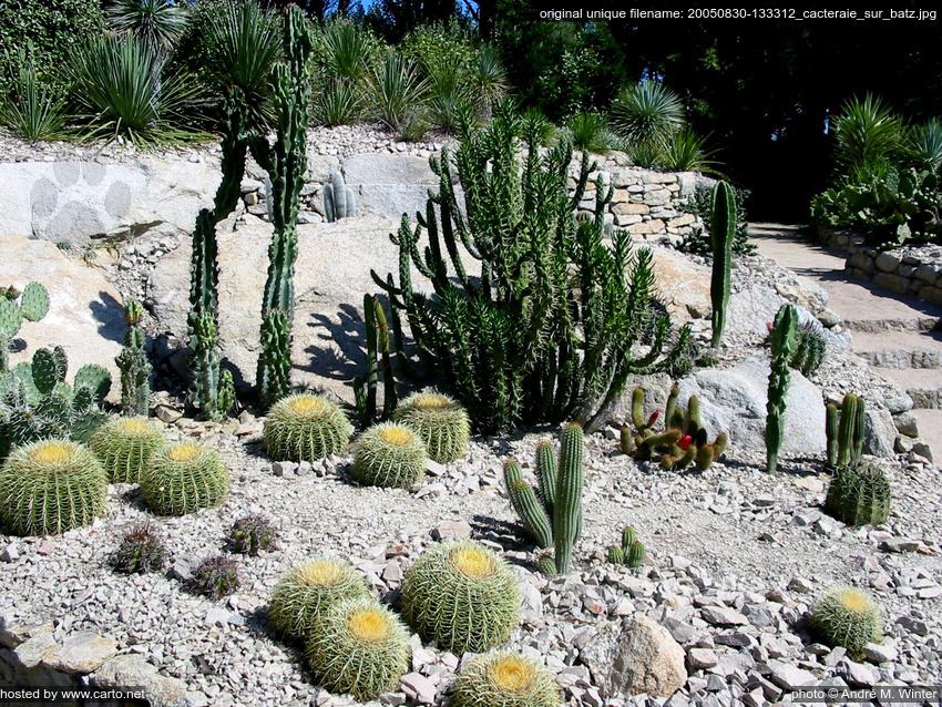 Cacteraie sur batz le de batz jardin georges delaselle for Jardin georges delaselle