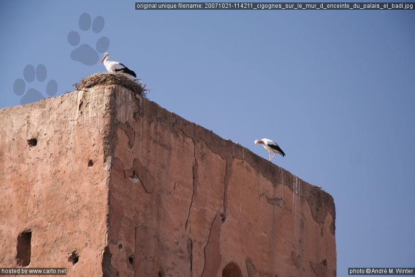 cigognes sur le mur d 39 enceinte du palais el badi dans et autour de la m dina de marrakech. Black Bedroom Furniture Sets. Home Design Ideas
