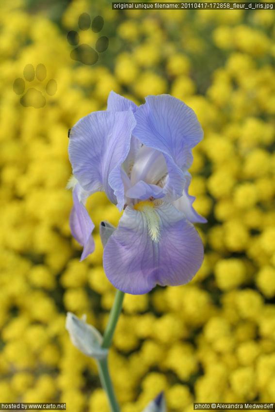 Fleur D Iris Notre Dame De Peygros Et La Chapelle St Cassien Des