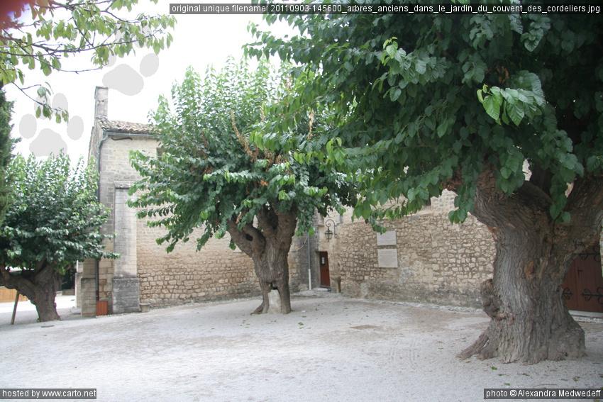 Arbres anciens dans le jardin du couvent des cordeliers for Les arbres du jardin