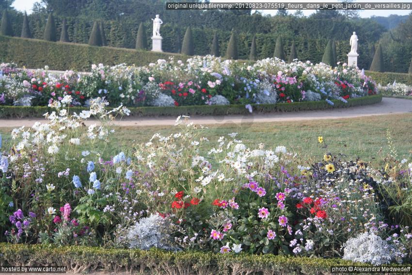 Fleurs dans le petit jardin de versailles jardins de for Jardin de versailles