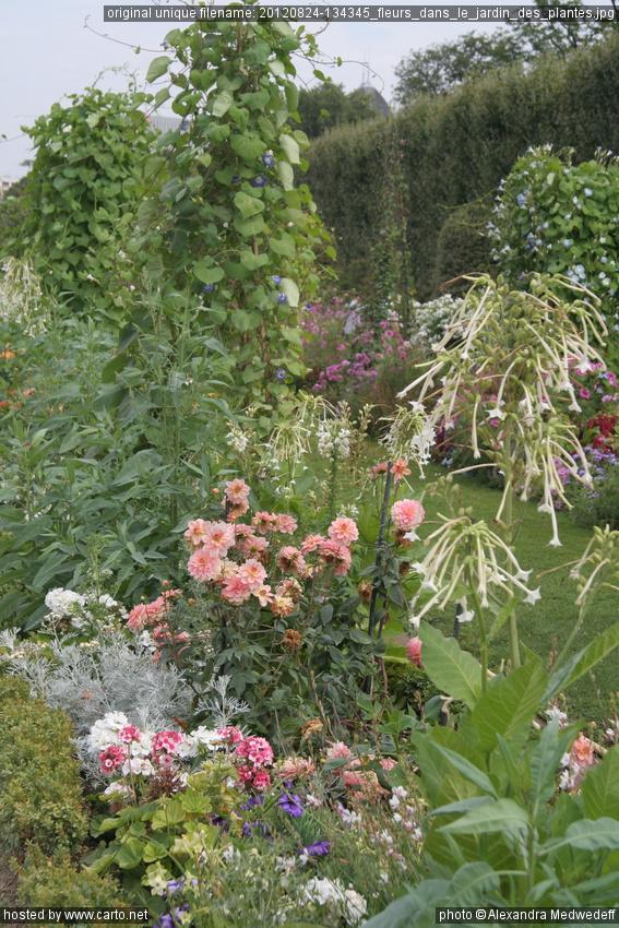 Fleurs dans le jardin des plantes au jardin des plantes for Au jardin des plantes poem