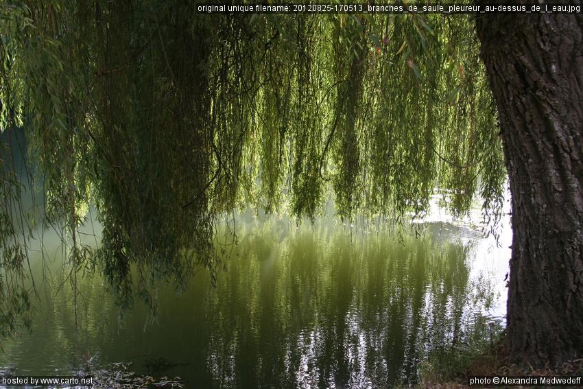 branches de saule pleureur au dessus de l 39 eau azay le rideau ao t 2012. Black Bedroom Furniture Sets. Home Design Ideas