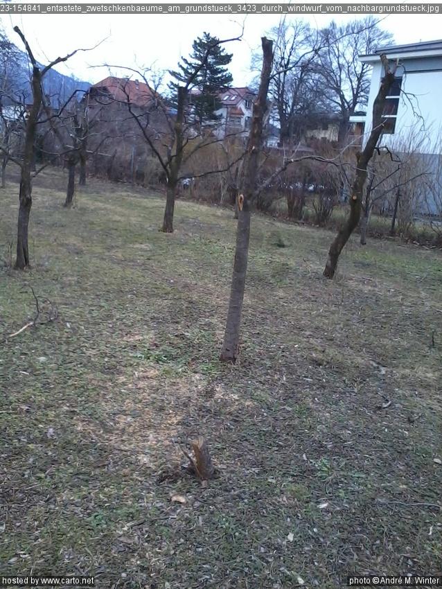 Schäden Durch Bäume Vom Nachbargrundstück