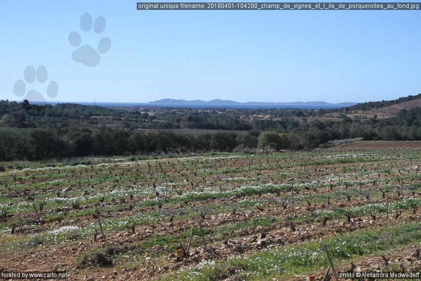 Champ De Vigne champ de vignes et l'Île de porquerolles au fond (dolmen de
