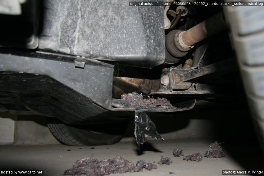 marderattacke seitenansicht der marder hat in der geschlossenen garage zugeschlagen mai 2008. Black Bedroom Furniture Sets. Home Design Ideas